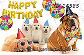 Interlitho-Alfredo, REALISTIC ANIMALS, REALISTISCHE TIERE, ANIMALES REALISTICOS, photos+++++,dogs, party,KL16585,#a#, EVERYDAY
