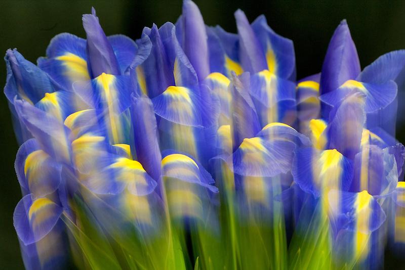 Impressionistic shot of Iris.