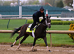 LOUISVILLE, KY -APR 25: Kentucky Derby hopeful Noble Indy trains for the Kentucky Derby at Churchill Downs, Louisville, Kentucky. (Photo by Mary M. Meek/Eclipse Sportswire/Getty Images)