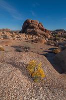 Joshua Tree National Park, California, US