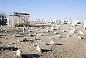 Irak 2000  Cimetiere de Halabja  Iraq 2000  Gravyard in Halabja