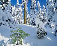 New snow on forest on  Mt Ashland Oregon