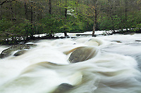 Heavy spring rain swells West Prong of Little Pigeon River