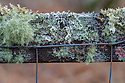 Various lichens growing on a wooden fence. Kyle of Lochalsh, Scotland. March.