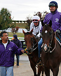 October 26, 2015:  Beholder crossing Rice Rd. on her way back to the barn after her final work for the Breeder's Cup Classic.  Beholder, trained by Richard Mandella, and owned by B. Wayne Hughes, cross entered in the Breeder's Cup Classic Grade 1 $5,000,000, and the Breeder's Cup Distaff $2,000,000.  Candice Chavez/ESW/CSM