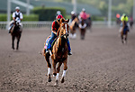 January 24, 2019: Channel Maker exercises as horses prepare for the Pegasus World Cup Invitational on January 24, 2019 at Gulfstream Park in Hallandale Beach, Florida. Scott Serio/Eclipse Sportswire/CSM