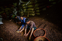 Workers, who are paid about 300,000 VND (GBP 10.20) a day, in the basement of Hue Hoan, a black cardamom (Thao Qua) dealer's shop, sorting the dried seed pods.