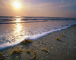 Padre Island National Seashore, TX<br /> Sunrise on the Texas Gulf Coast from barrier island beach with scattered shells and seaweek exposed at low tide