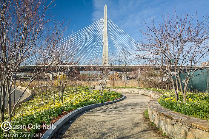 The Leonard P. Zakim Bunker Hill Bridge with a daffodil carpet in Boston, MA