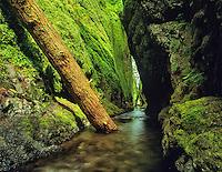 Oneonta Gorge, Oregon.