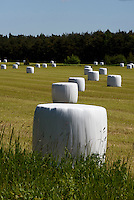 Gassilage bei Lumelunda auf der Insel Gotland, Schweden, Europa<br /> gassilage near Lumelunda, Isle of Gotland, Sweden