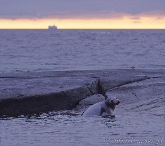 Seal and Silja Line at dawn