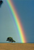 Rainbow near tree, Haleiwa, Oahu