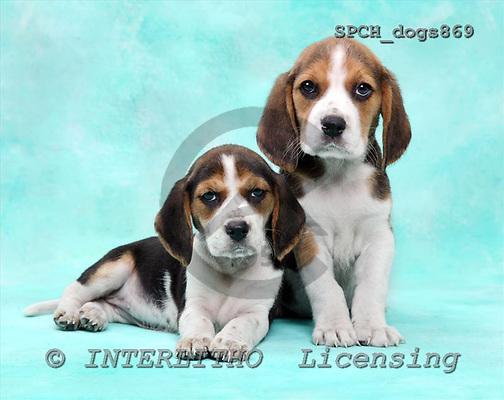 Xavier, ANIMALS, dogs, photos+++++,SPCHDOGS869,#a# Hunde, perros
