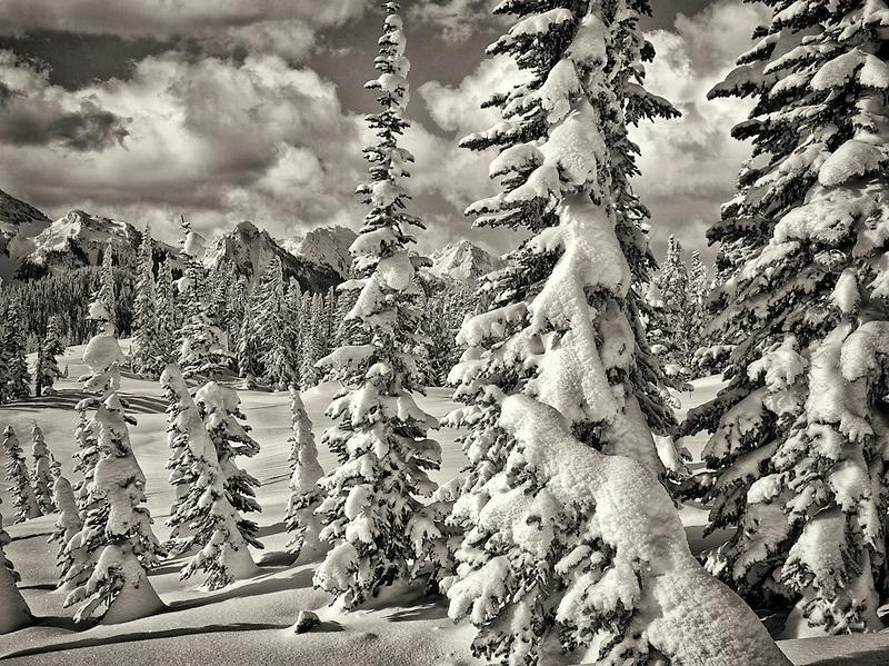 Snow covered trees and Tatoosh Mountains. Mt. Rainier National Park, Washington