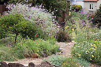 Gravel path through California native plant front yard mixed garden of shrubs, perennials, wildflowers, and grasses