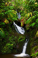 A remote waterfall in Manoa Valley on Oahu