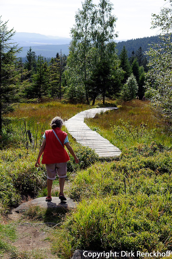 Wanderweg bei den Hohneklippen  im Nationalpark Harz, Sachsen-Anhalt, Deutschland