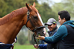 LOUISVILLE, KY -APR 25: Kentucky Derby hopeful Good Magic relaxes with his grooms after training for the Kentucky Derby at Churchill Downs, Louisville, Kentucky. (Photo by Mary M. Meek/Eclipse Sportswire/Getty Images)