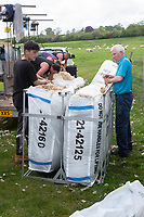 18-5-2021 Bagging clipped wool<br /> ©Tim Scrivener Photographer 07850 303986<br />      ....Covering Agriculture In The UK....