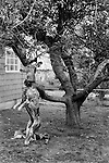 """Aztec New Mexico USA 1971. A skinned deer hangs from a tree in a front garden. The head will become a """" trophy"""", while the body will be put into the deep freeze."""