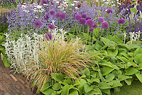Allium, Nepta catmint, Veronica, ornamental grasses, Stachys, Salvia, in gorgeous lavernder and purple color theme flower planting combination of perennials and bulbs