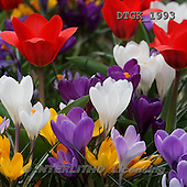 Gisela, FLOWERS, photos+++++,DTGK1993,#f#