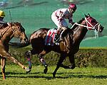 14 November 2009:  Bim Bam and Jockey Eibar Coa winning the Appleton Juvenile Stakes at Calder Race Course in Miami Gardens, FL.