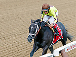 Pure Silver (no. 1) wins the Adirondack Stakes (Grade 2) for two year old fillies August 12 at Saratoga Race Course, Saratoga Springs, NY.  The winner, ridden by John Velazquez and trained by Todd Pletcher, won by 9 lengths in the 6 1/2 Furlong race against 7 opponents.  (Bruce Dudek/Eclipse Sportswire)