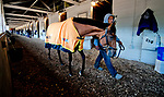 LOUISVILLE, KY - APRIL 30: Audible, trained by Todd Pletcher, walks shed rom after exercising in preparation for the Kentucky Derby at Churchill Downs on April 30, 2018 in Louisville, Kentucky. (Photo by Scott Serio/Eclipse Sportswire/Getty Images)