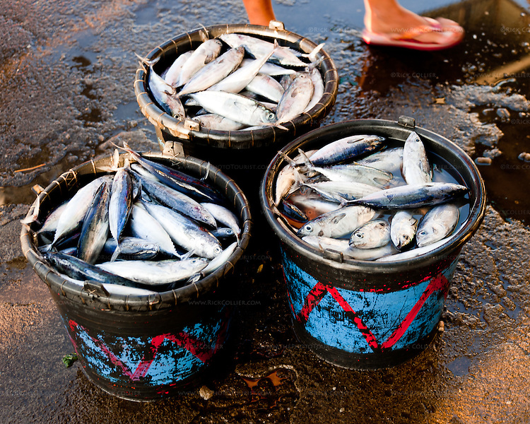Buckets of fresh fish for sale at the early morning fish market in Bitung (the largest port in the Lembeh Strait, North Sulawesi, Indonesia).