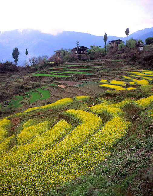 Farmland, Bhutan