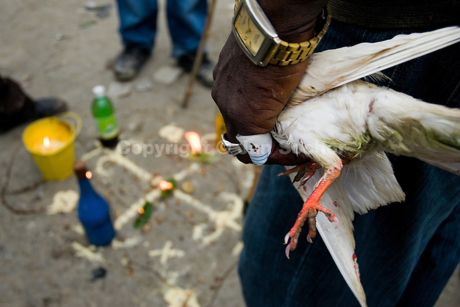 A Haitian man holds a white pigeon destined as an animal sacrifice during the Voodoo ceremony in Saut d'Eau, Haiti, July 16, 2008. Every year in summer thousands of pilgrims from all over Haiti make the religious journey to the Saut d'Eau waterfall (100km north of Port-au-Prince). It is believed that 150 years ago the spirit of Virgin Mary (Our Lady of Mount Carmel) has appeared on a palm tree close to the waterfall. This place became a main pilgrimage site in Haiti since then. Haitians wearing only underwear perform a bathing and cleaning ritual under the 100-foot-high waterfall. Voodoo followers (many Haitians practise both voodoo and catholicism) hope that Erzulie Dantor, the Voodoo spirit of water, manifest itself and they get possessed for a short moment, touched by her presence.