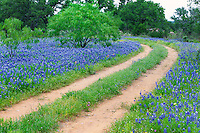 Spring 2012, South and Central Texas.<br /> <br /> Canon EOS 5D II, Canon 24-105 f/4L lens