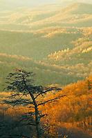 Winter sunrise along the slopes of Grandfather Mountain, Blue Ridge Parkway, North Carolina