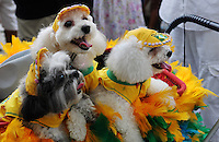 Dogs dressed in a carnival costume, a T-shirt with Brazilian colours soccer team, take part in the animals carnival, Copacabana, Brazil, February 3, 2013. (Austral Foto/Renzo Gostoli)