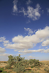 Israel, Negev, Wadi Lavan near Nitzana