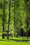 Italy, South Tyrol (Trentino - Alto Adige), near Sexten, district Moos: the picturesque Fischleintal (Val Fiscalina) at Drei Zinnen Nature Park (Parco Naturale Tre Cime), side valley of Sexten Valley (Valle di Sesto) | Italien, Suedtirol, bei Sexten, Ortsteil Moos: das malerische Fischleintal im Naturpark Drei Zinnen - ein Nebental des Sextentals