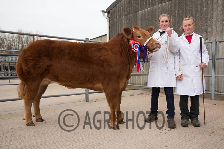 Melton & Belvoir Christmas Fatstock Show & Sale<br /> Melton Mowbray,Leicestershire<br /> Overall Champion with left to right<br /> Charlotte Davies and Georgina Davies<br /> ©Tim Scrivener 07850 303986<br />  Melton & Belvoir Christmas Fatstock Show & Sale<br /> Melton Mowbray,Leicestershire<br /> ©Tim Scrivener 07850 303986