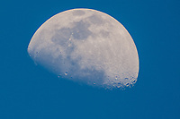 Waxing gibbous moon, one day after first quarter, April 2020.