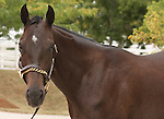 11 September 2010.  Hip #207  A.P. Indy - Take Charge Lady colt, consigned by Eaton Sales.