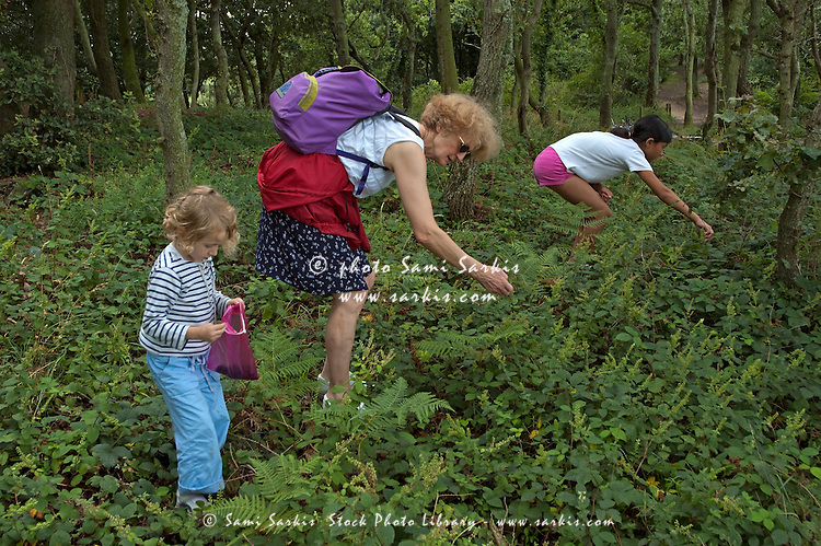 Two girls and their grandmother picking blackberries, Brittany, France.