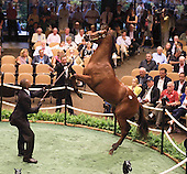 Leapin' Lizards! HIP 12 shows his jumping prowess at the sales.