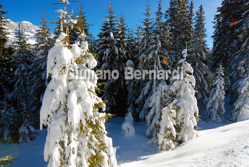 Madonna di Campiglio, Dolomiti di Brenta, Parco Naturale Adamello Brenta, piste campiglio,madonna di campiglio winter, photos of madonna di campiglio, foto di madonna di campiglio, madonna di campiglio estate inverno Foto di Madonna di Campiglio, Dolomiti di Brenta, Parco Naturale Adamello Brenta, piste di campiglio,madonna di campiglio in winter, photos of madonna di campiglio, foto di madonna di campiglio, madonna di campiglio estate inverno