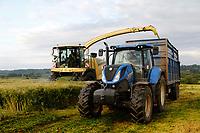Photo: Richard Lane/Richard Lane Photography. Harvesting whole crop rye for anaerobic digestion near South Petherton, Somerset. 19/06/2019
