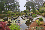 Koi pond in Japanese Garden area of Shore Acres State Park botanical gardens, an Oregon State Park that adorns Cape Arago on the Pacific Ocean coast of Oregon.  Cape Arago on the Central Oregon Coast with views of Sunset State Park and the Umpqua River Lighthouse, and massive headlands. Near Coos Bay, Oregon, Cape Arago is known for its rugged views, hiking, wildlife, beach access, and Sunset Beach State Park and unique geology.