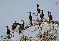 Cormorants were a common sight during our many river excursions.