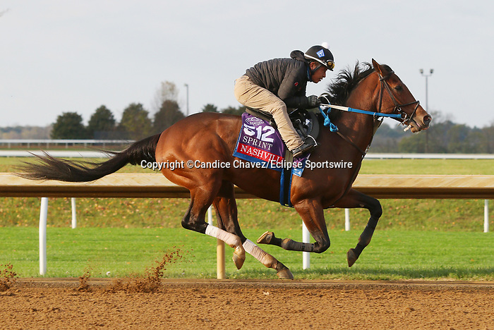 Nashville, trained by trainer Steven M. Asmussen, exercises in preparation for the Breeders' Cup Sprint at Keeneland Racetrack in Lexington, Kentucky on November 1, 2020. /CSM