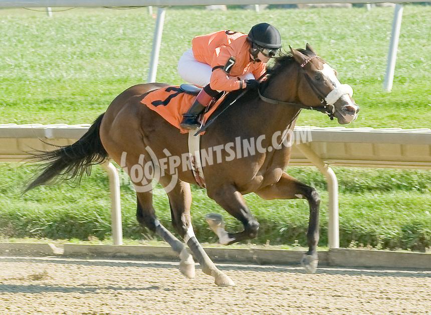 Gotogo Bye winning at Delaware Park on 11/2/11