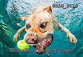 REALISTIC ANIMALS, REALISTISCHE TIERE, ANIMALES REALISTICOS, dogs, paintings+++++SethC_320B9067rev,USLGSC10,#A#, EVERYDAY ,underwater dogs,photos,fotos ,Seth
